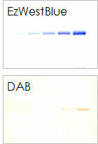 Comparison of detection efficiency with DAB